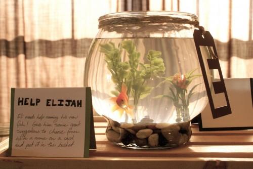 Eli's Goldfish Ned